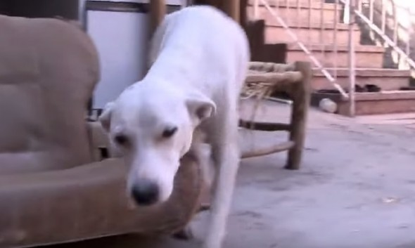 02-Man-Rescues-Puppies