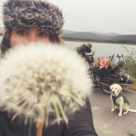 02-Senior-Dog-Travels