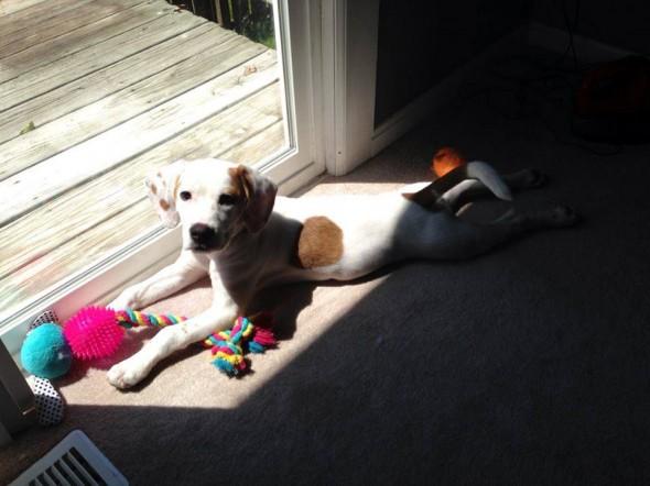 02Puppy & Adopt