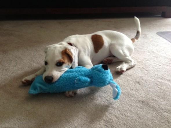 04Puppy & Adopt