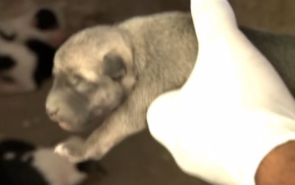 05-Man-Rescues-Puppies