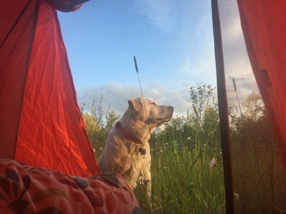 05-Senior-Dog-Travels