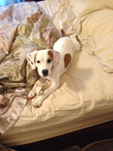 05Puppy & Adopt