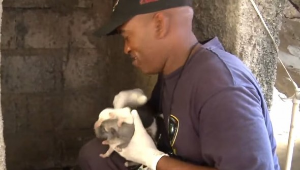07-Man-Rescues-Puppies