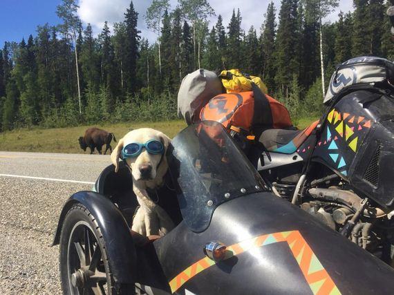 07-Senior-Dog-Travels