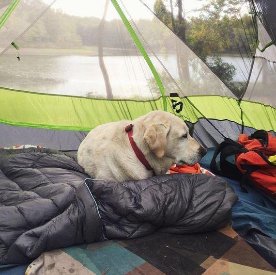 10-Senior-Dog-Travels