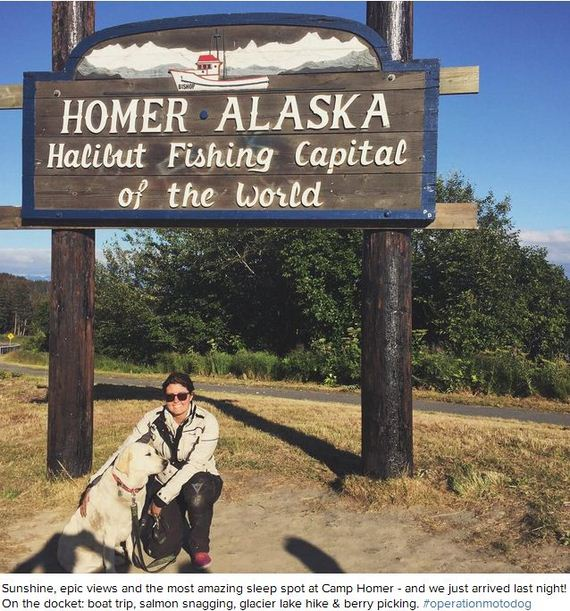 12-Senior-Dog-Travels