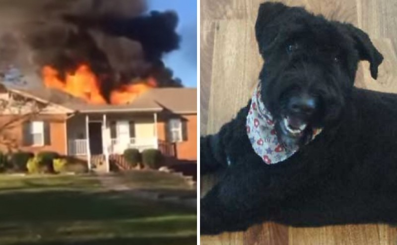 Man Runs Into Burning Building To Save Dog. Watch Him In Action!