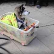 Man Shows us all How to Respect our Elder Dogs