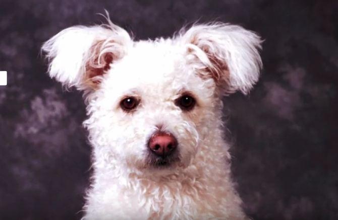 Ten Dog Breeds You Had No Idea Existed