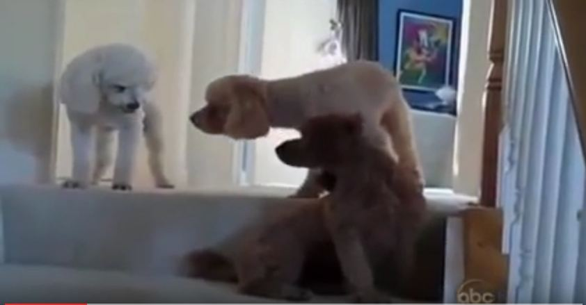 When Mom Asks Who Made The Mess, This Dog Is Totally Busted