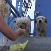 These Dogs Were Living In A Trash Heap, But Rescuers Knew They Had To Be Saved