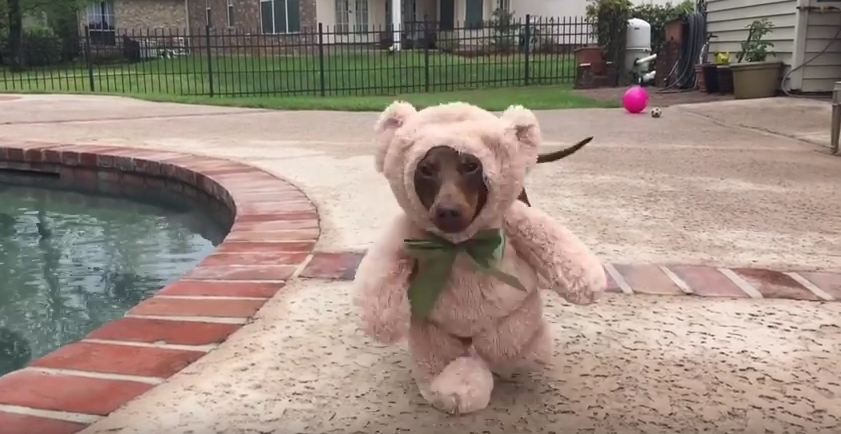 Give Up Now — This Dog Just Epically Won Halloween With This Costume!