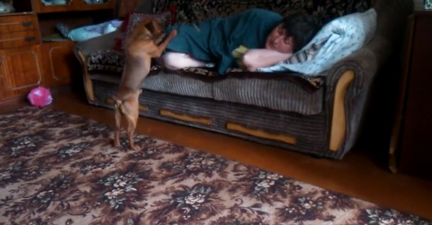 Dog begs for attention in peculiar way
