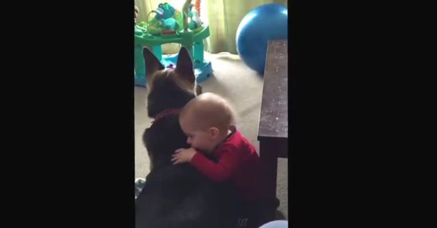 German Shepherd and baby are best friends