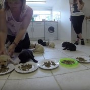 10 Pups Eat Solid Food With Mom For The First Time And What A FEAST It Is!