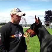 This Doberman Is Amazing Following Instruction But It's The Last Two Commands You Will Really LOVE!