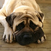 Ask The Vet: Why Does My Dog Hump Things? What Can I Do?
