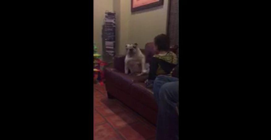 Toddler and English Bulldog dance together