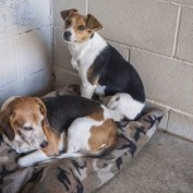 Shelter Makes Desperate Public Plea for Dog Beds
