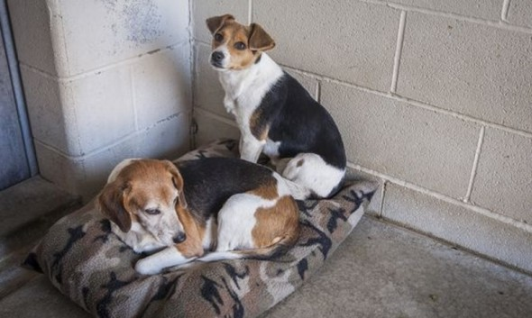 Shelter Makes Desperate Public Plea for Dog Beds