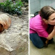 UPDATE: Dog Found Buried Alive Has Been Adopted