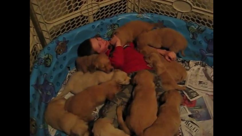 Young Boy Thinks He's Dreaming When He Gets Smothered By 14 Puppies!