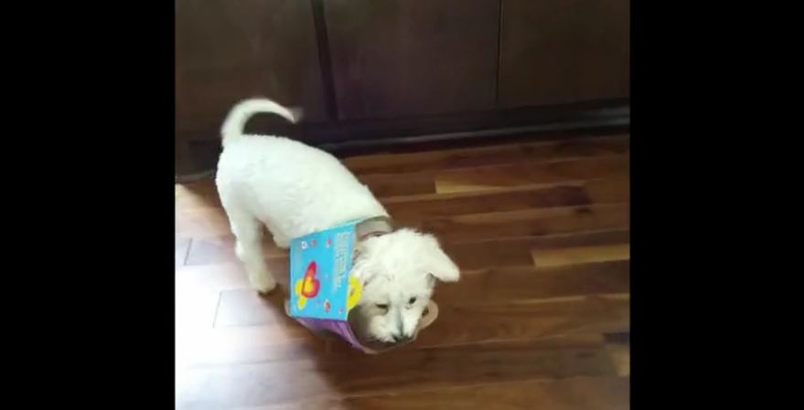 Pup gets caught in 'Happy Meal' box