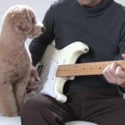 Guitar Playing Dog!