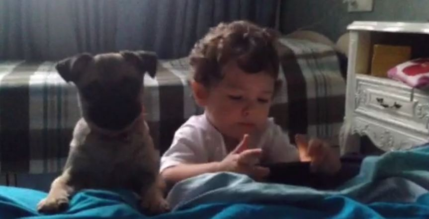 Cute dog and adorable baby playing together