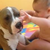 Adorable baby examines dog's teeth