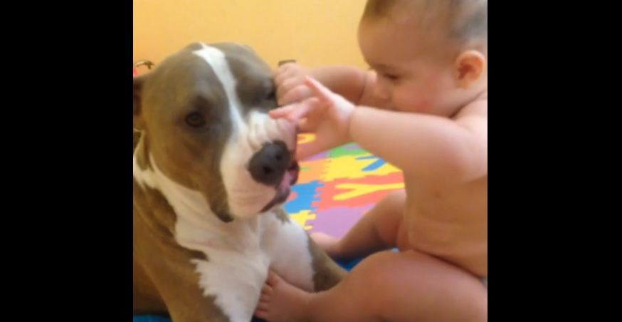 Adorable baby examines dog's teeth
