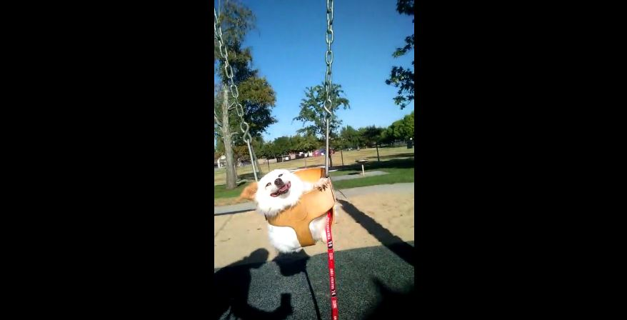 "Rescued dog ""swings"" into the good life"