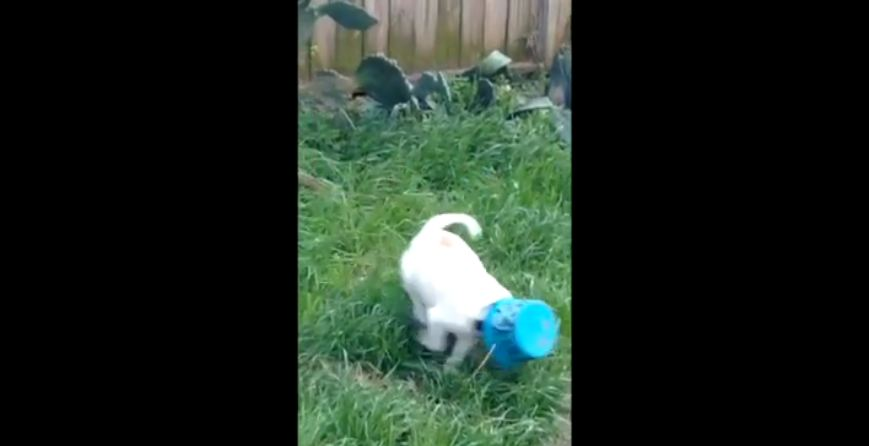 Bucket Gets Stuck on Adorable Puppy's Head