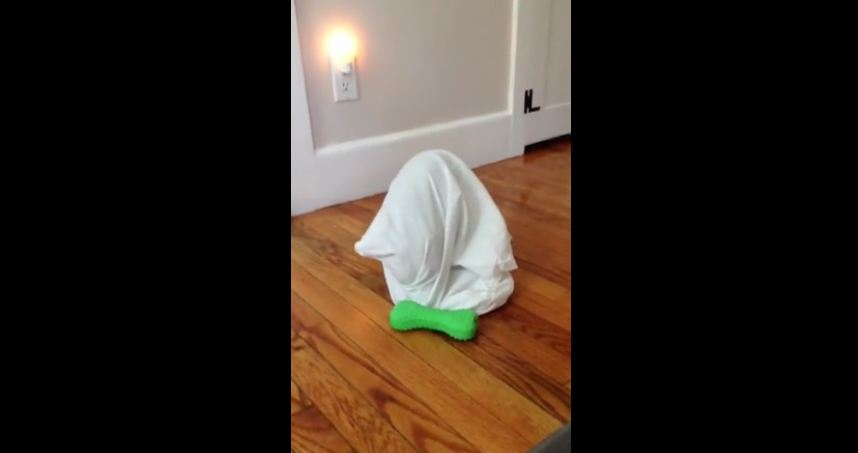 Puppy gets herself stuck inside pillow case