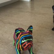 """French Bulldog confused by """"fake"""" dog"""