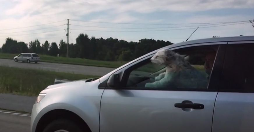 Nothing is as majestic as this cruising dog!
