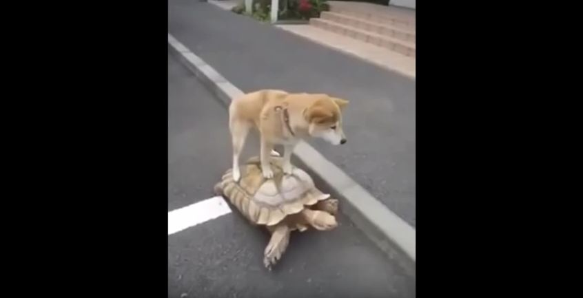 """When They Told Their Dog To """"Come"""", They Didn't Expect This!"""
