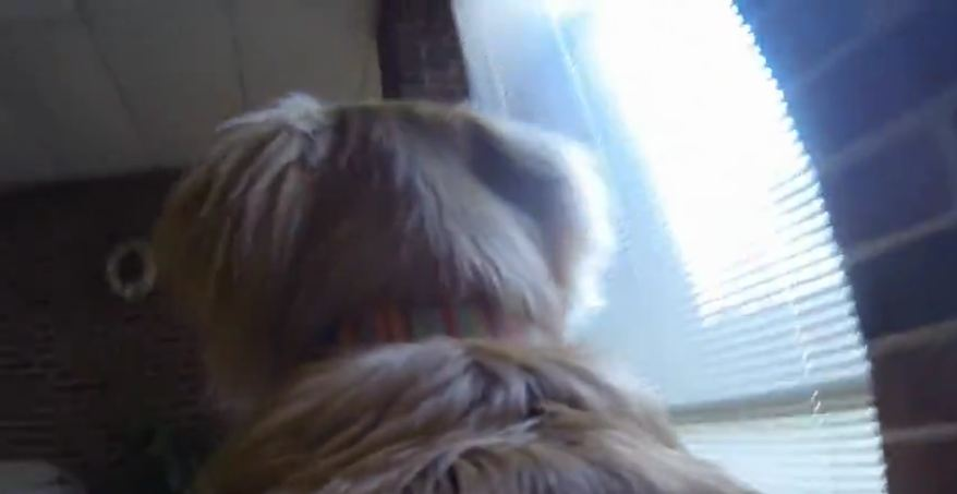GoPro captures dog's activities while owner's away
