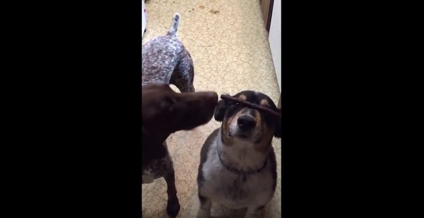 This Dog Decides He Has A Better Trick Than The One Planned