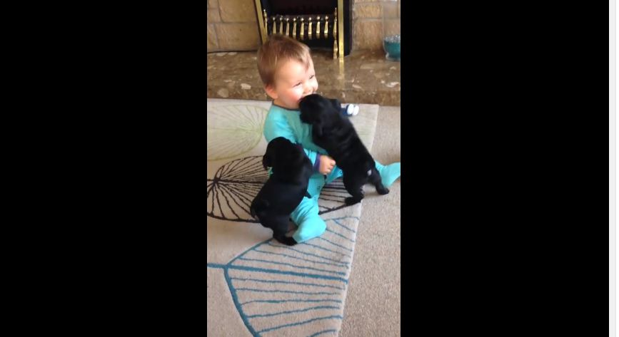 This Baby Playing With Two Pug Puppies Is SO Cute, It Actually Hurts