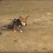 This Beagle Was Set To Be Put Down — Until An Unlikely Group Came To His Rescue