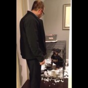 """Puppy decides to """"remodel"""" his bed area"""