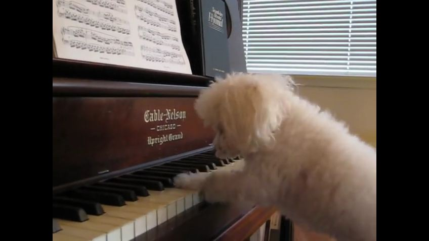This Pup Is Giving The Avant-Garde Piano Performance Of A Lifetime…A Must See!