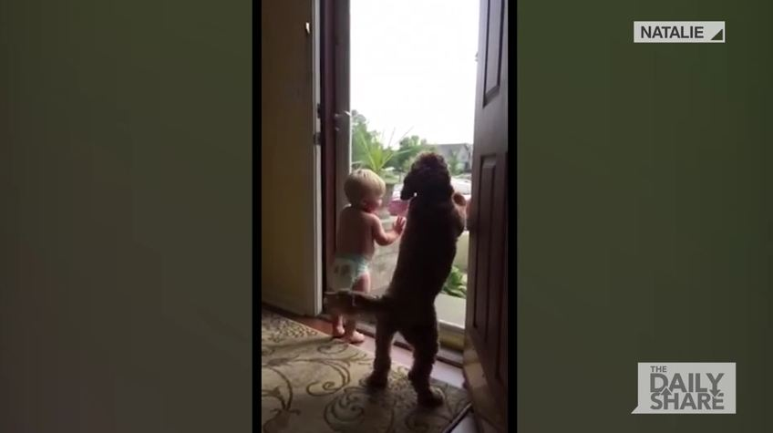 Baby And Dog Welcomes Daddy Home In The Most Adorable Way