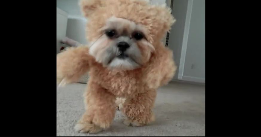 This Dog's Adorable Halloween Costume Has Everyone Else's Beat