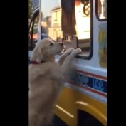 When The Ice Cream Truck Rolls Around, This Dog Does The CUTEST Thing