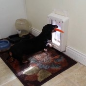 Health Conscious Dog Doesn't Fit in Doggy Door