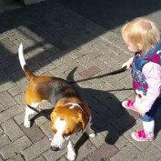 Why baby shouldn't walk with a dog