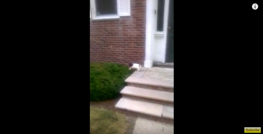 He Wanted To Teach This Puppy How To Take The Stairs…But Then He Did This!